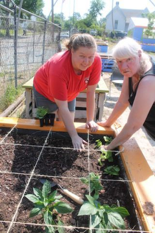 Raised beds 2015