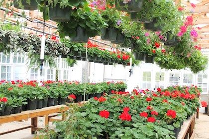 Spring greenhouses